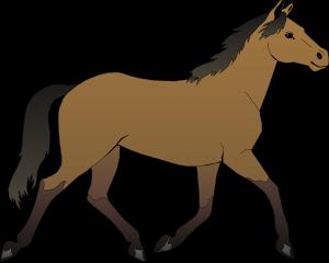 horse-48394_1280